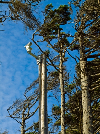 Windswept Trees and a Security Camera on a Pole photo