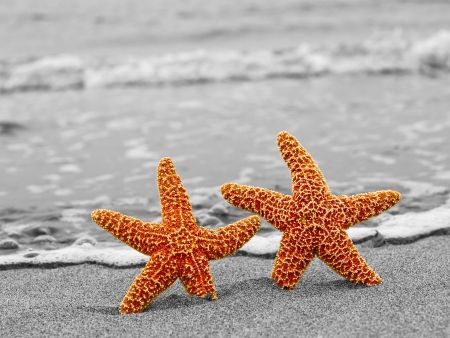 Two Orange Starfish Against a Black and White Shoreline photo