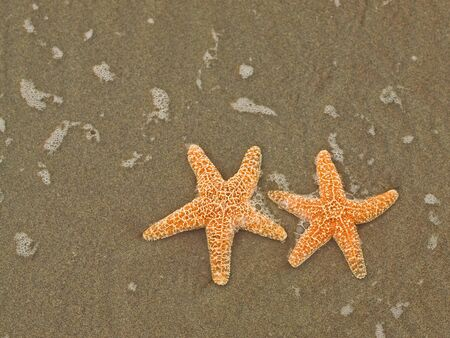 Two Starfish on the Shoreline with Waves photo
