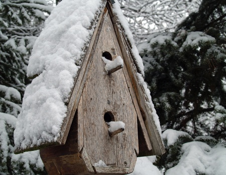 A Snow Covered Birdhouse After a Snowfall photo
