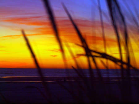 Golden Sunset at the Beach with Tall Grass in the Wind photo
