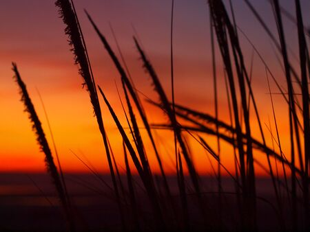 hirtshals: Golden Sunset at the Beach with Tall Grass in the Wind