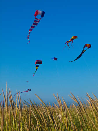 Various Colorful Kites Flying in a Bright Blue Sky Imagens