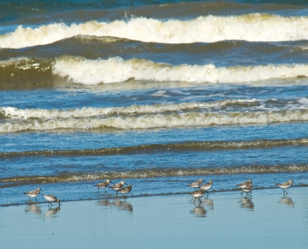 seabirds: A Flock of Little Brown Seabirds at the Seashore Stock Photo