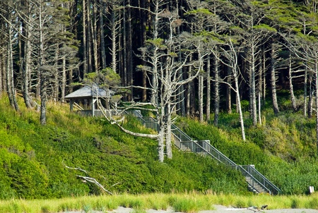 A Gazebo in the Woods with a Stairway from the Beach photo