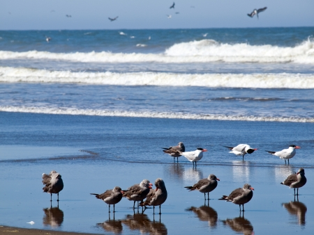 A Variety of Seabirds at the Seashore photo