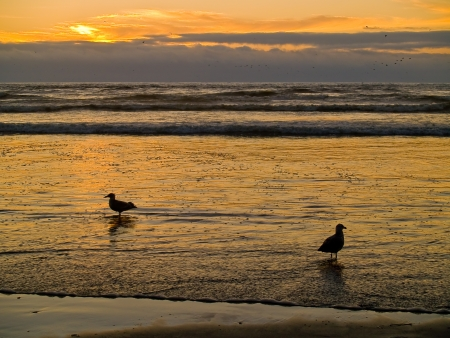 Two Seagulls at the Oceans Shore at Sunset photo