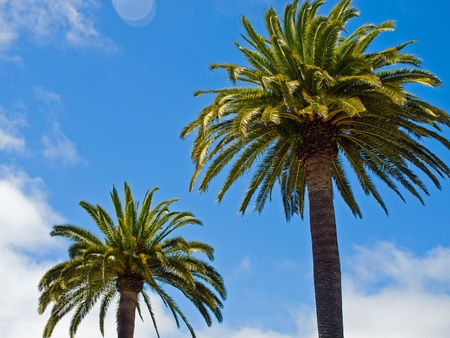 Two Palm Trees Before a Clear Blue Sky photo