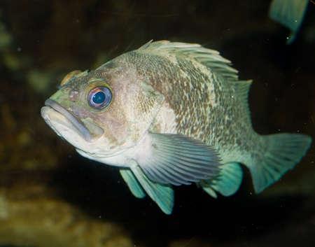 Fish on Display in a Salt Water Aquarium Stock Photo - 19989919