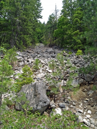 Dry Streambed of Rocks and Stones in a Wooded Area photo