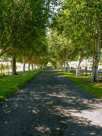 A Paved Path Lined by Trees on Both Sides on a Bright, Sunny Day