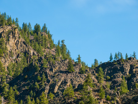 evergreen trees: Evergreen Trees on a Steep, Rocky Mountainside in Montana USA