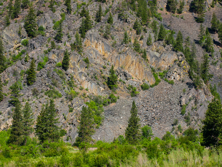 Evergreen Trees on a Steep, Rocky Mountainside in Montana USA