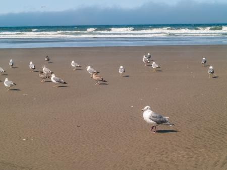 seabirds: A Variety of Seabirds at the Seashore Stock Photo