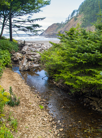underbrush: A Stream on a Bed of Rocks with Green Underbrush
