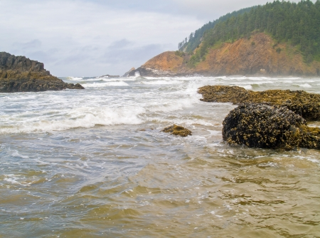 roaring sea: High Tide Coming in on the Oregon Coast at Ecola Beach