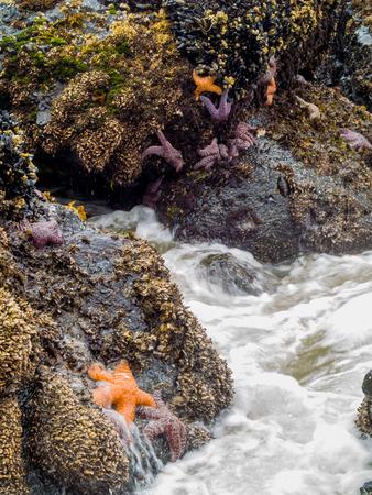 ヒトデでてくる波が岩にアタッチされています。