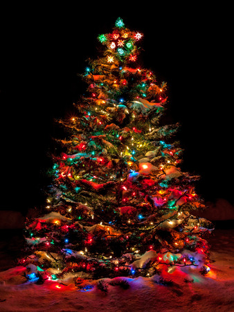 Snow Covered Christmas Tree with Multi Colored Lights photo