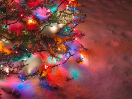Snow Covered Christmas Tree with Multi Colored Lights at Night photo