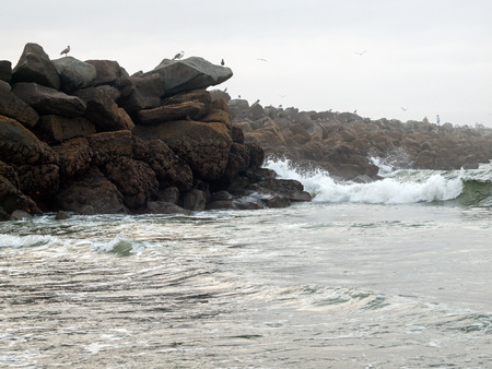 seabirds: A Rock Jetty with Seabirds and Waves Flowing on a Beach