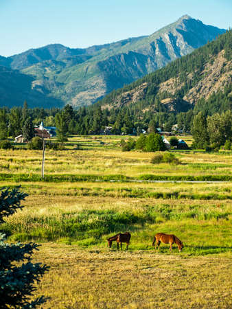 Horses in a Fenced Field with Mountains photo
