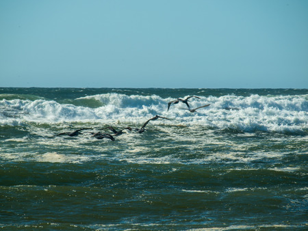 seabirds: Seabirds Flying over Waves Rolling on the Beach