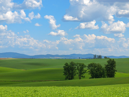 green fields: Beautiful Rural Scene with Green Fields and Cloudy Blue Sky Stock Photo