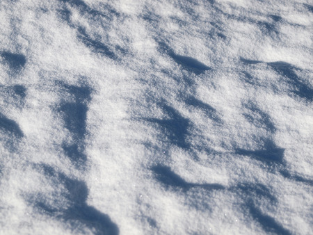 snowy field: Winter Background of a Snowy Field