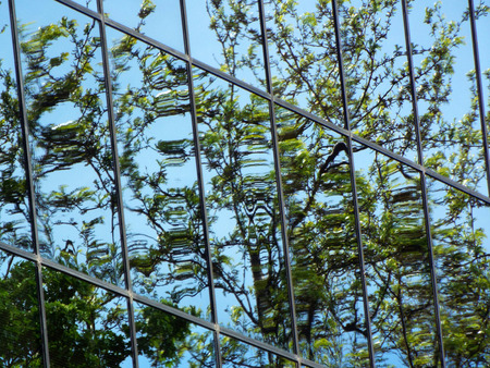 Trees reflected in windows of modern office building Stock Photo - 65566086