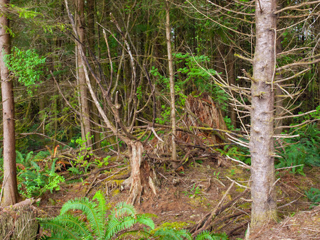 Forest Trees Regrowth from Roots and Stumps
