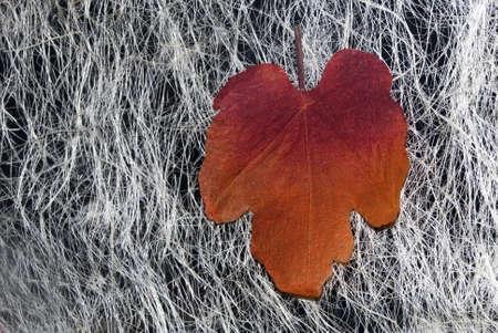 Fake Autumn Leaf Stock Photo