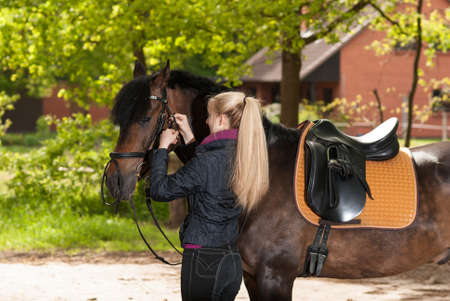 fair haired: Girl bridles her brown horse (New-Forest-Pony) Stock Photo