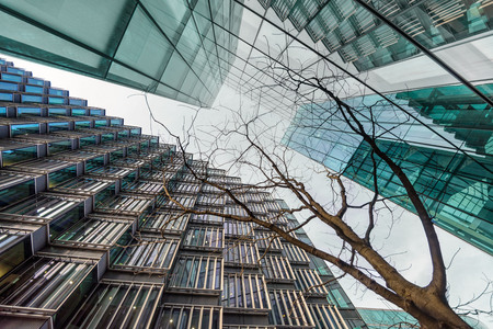 magnificence: Low angle of young tree surrounded by tall corporate glass buildings. Southwark, London