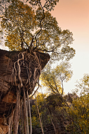Looking up at tree roots and vines dangling from rock escarpment. Northern Territory, Australia Stock Photo