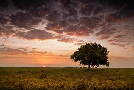 Single tree under glowing sky at dusk with sun touching the horizon. Northern Territory, Australia Stock Photo
