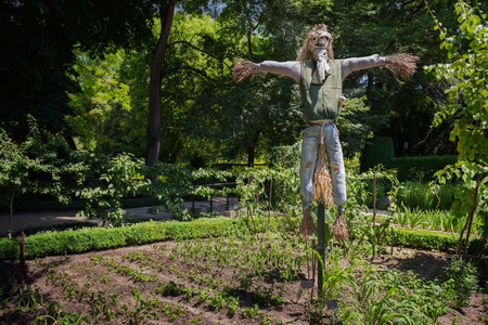 A tall garden scarecrow protects plants and vegetables from birds. Madrid, Spain.