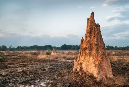 Termite mound at dawn (Nasutitermes triodae), Kakadu National Park, Australia