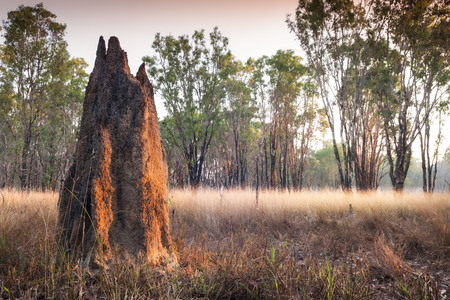 Termite mound at dawn (Nasutitermes triodae), Kakadu National Park, Australia Stock Photo - 92999268