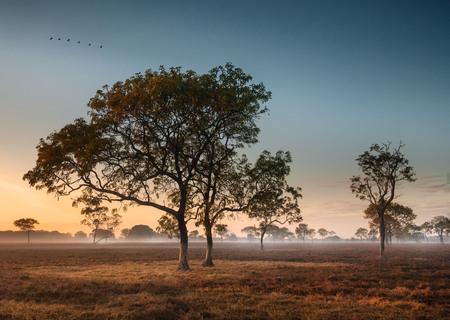 Dawn mist amongst trees in the Australian Outback (Darwin, Northern Territory)