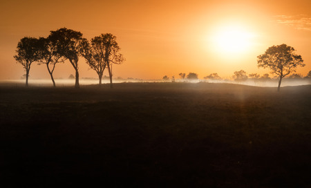 Dawn mist amongst trees in the Australian Outback (Darwin, Northern Territory) Stock Photo - 94340271