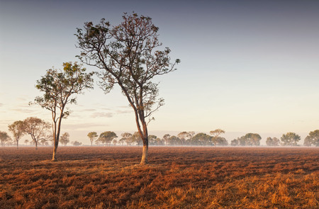 Dawn mist amongst trees in the Australian Outback (Darwin, Northern Territory) Stock Photo - 94125225