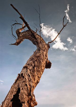 A single tree at dusk in the Nourlangie badlands, Kakadu National Park Imagens