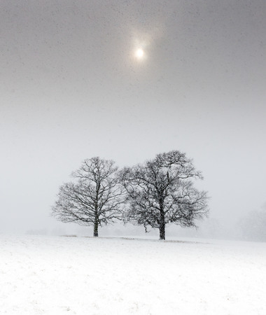 Two trees in a snow covered field under a pale sun Stock Photo - 97114749