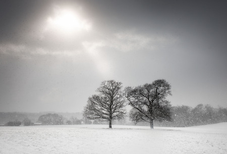 Two trees in a snow covered field under a pale sun