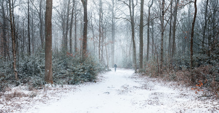 Single hiker in snow covered winter forest