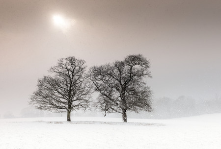 Two trees in a field during heavy snow with a pale sun Imagens