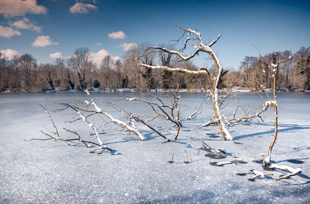 Tree trapped in the ice of a frozen lake. Sevenoaks, Kent, England Stock Photo - 97052356