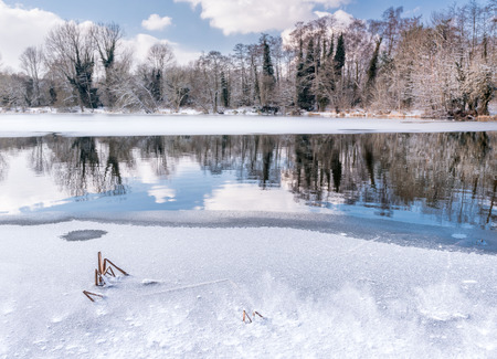 Reflections in a frozen woodland lake as it begins to thaw. Sevenoaks, Kent, England Imagens