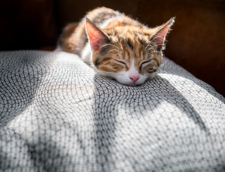 Cute backlit kitten sleeping on a luxurious cushion