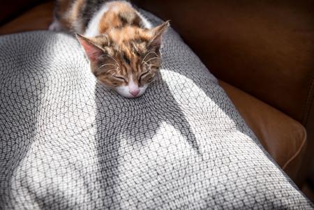 Shadow of cute backlit kitten sleeping on a luxurious cushion Imagens